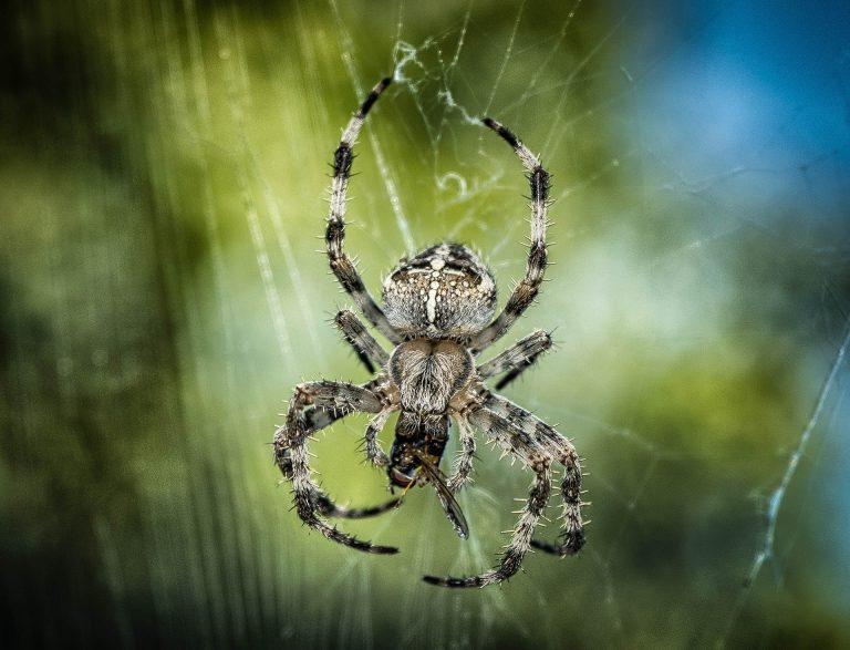 Dedetização de aranhas em Natal