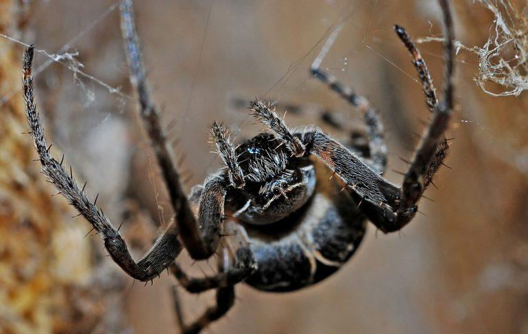 Controle de aranhas