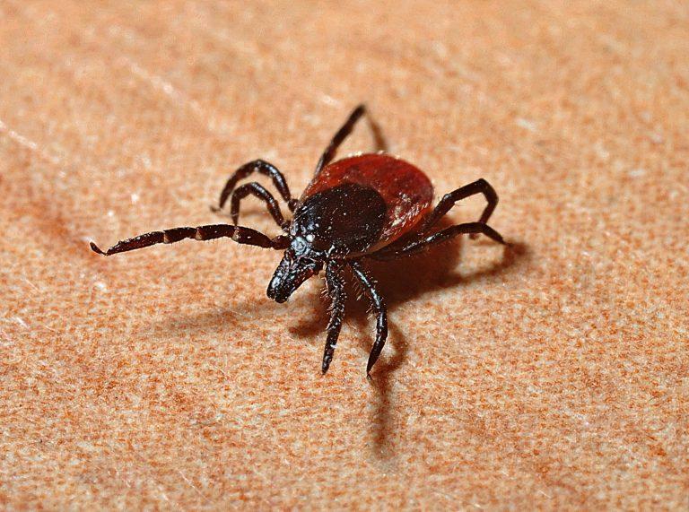 Dedetização de carrapatos e moscas em Natal